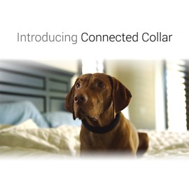 Dogtelligent Connected Collar