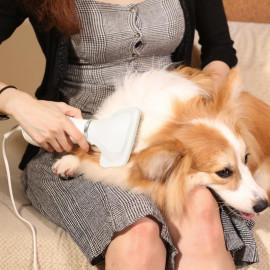 iPettie Pet Grooming Hair Dryer with Slicker Brush